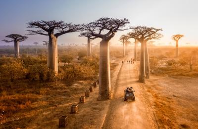 A la sombra del baobab (Kenia 7 noches)
