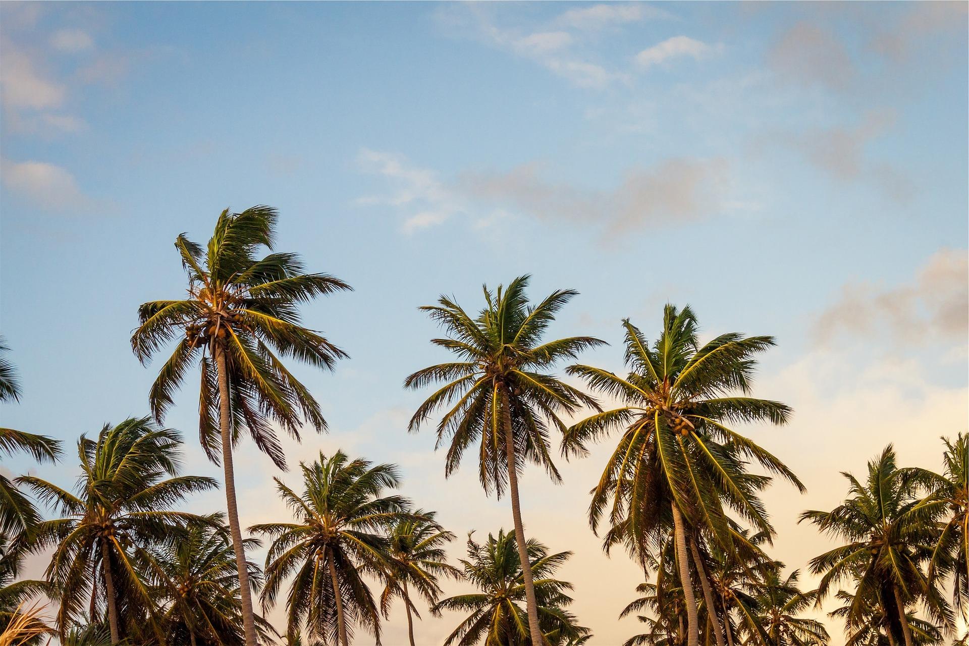 Viaja Solo. Punta Cana