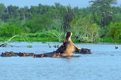 En busca del gran hipopótamo y Estancia en Zanzibar