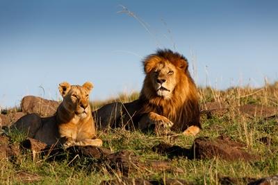 Un viaje junto al Rey León (Kenia y Tanzania 7 noches)
