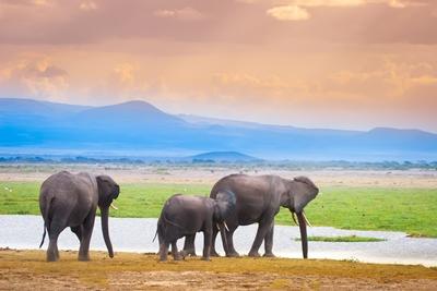 Tras la huella de los elefantes (Kenia 7 noches)