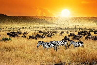 En un lugar de África (Kenia 7 noches)