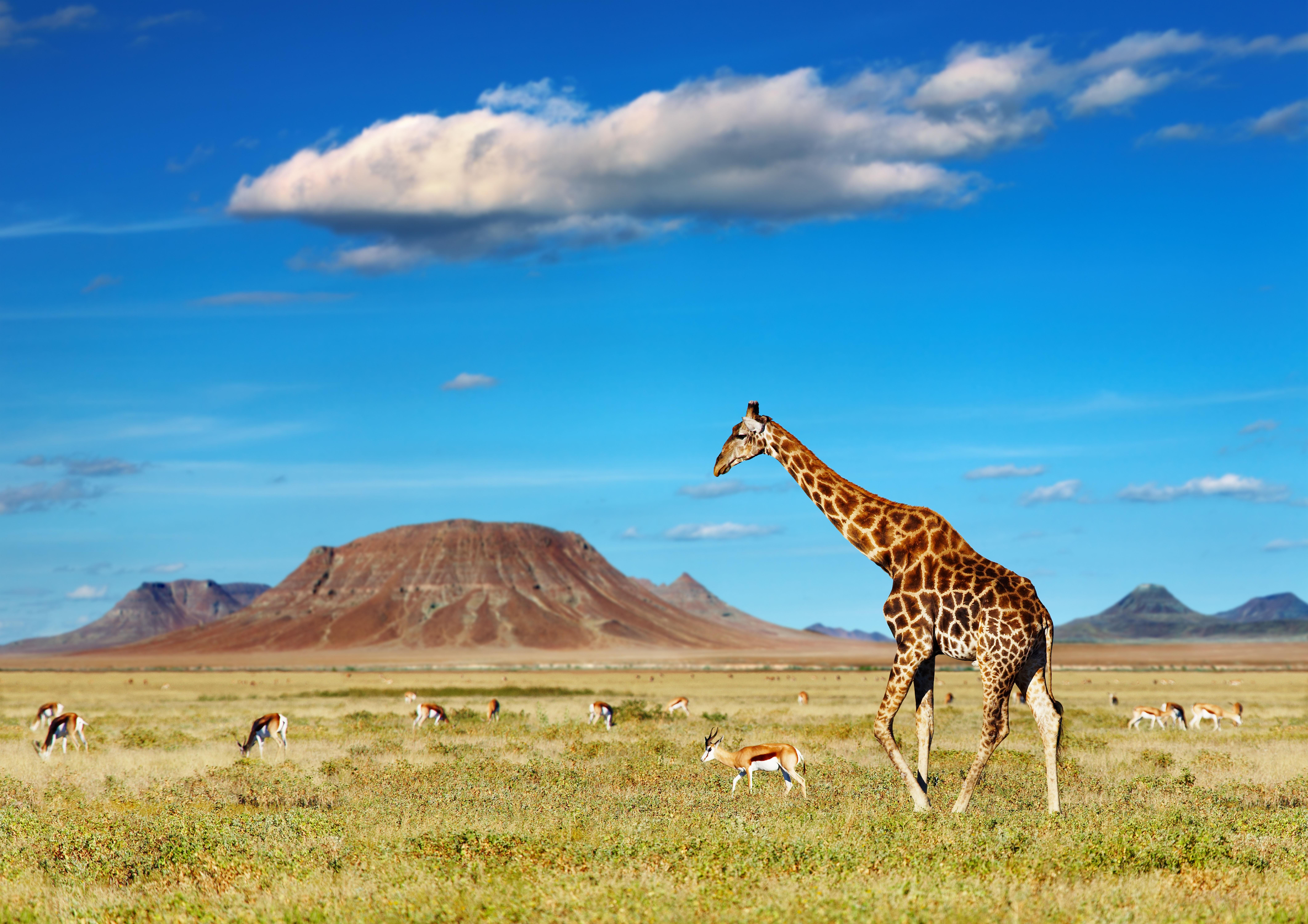Una aventura entre jirafas (Kenia 7 noches)