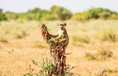 El libro de la selva (Kenia 7 noches)