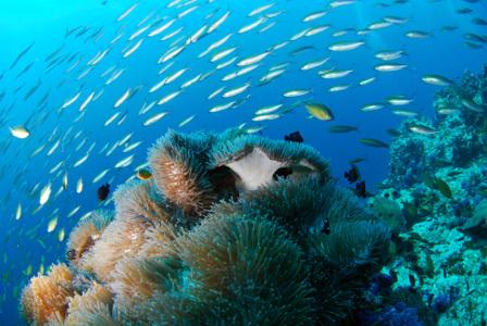 Snorkel en Mauricio 7 noches B. Exclusivo